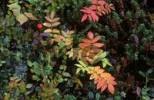 Thumbnail autumn herbs in Norway
