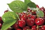 Thumbnail Sweet cherries