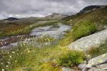 Thumbnail Rondane National Park, Norway, Scandinavia, North Europe