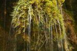 Thumbnail Detail, rivulet over moss, Upper Bavaria, Bavaria, Germany, Europe