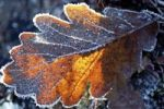 Thumbnail Frost on an autumn leaf