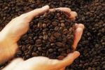 Thumbnail Hands holding coffee beans