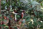 Thumbnail Jungle walk in the tropical rain forest Amazonia Brazil
