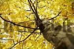 Thumbnail Deciduous tree in the autumn