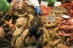 Thumbnail La Boqueria market, seafood, Barcelona, Catalonia, Spain, Europe
