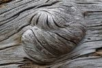 Thumbnail Structure, knots, knot in wood, Oregon, USA