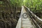 Thumbnail Mangroves on Vieques island, Puerto Rico