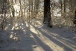 Thumbnail Snow covered forest in morning sun, Bavaria, Germany, Europe