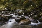 Thumbnail Mountain stream by the Copland Track, West Coast, South Island, New Zealand