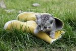 Thumbnail Kitten in rubber boot