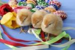 Thumbnail Easter setting with chicks