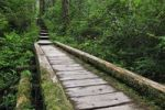 Thumbnail Wooden path in the rainforest, Olympic National Park, Washington, USA, North America