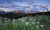 Thumbnail Mount Rainier and a field of flowers by sunrise, Mt. Rainier National Park, Washington, USA