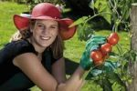 Thumbnail Female gardener harvesting tomatoes