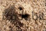 Thumbnail ant