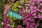 Thumbnail Road sign, flower decoration, Pearl District, Downtown of Portland, Oregon, USA