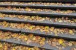 Thumbnail Autumnal leaves on steps