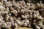 Thumbnail Garlic, garlic bulbs