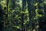 Thumbnail Rain forest in Lamington National Park, Queensland, Australia