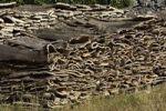 Thumbnail Piles of Cork Oak Quercus suber bark left to dry, Sardinia, Italy, Europe