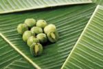Thumbnail Kiwi fruit formerly known as Chinese Gooseberry Actinidia chinensis, on banana leaves