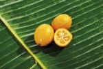 Thumbnail Kumquats or Cumquats Fortunella, on banana leaves