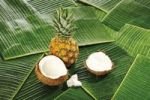 Thumbnail Coconuts Cocos nucifera, and chunks of coconut with Baby Pineaple Ananas comusus on banana leaves