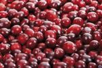 Thumbnail Cranberries, full frame