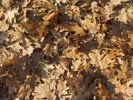 Thumbnail Autumn leaves, background