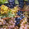 Thumbnail Fresh white and blue-coloured wine grapes /