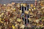 Thumbnail Autumn leaves clogging a drain cover /