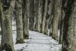 Thumbnail A tree-lined road in winter / Pappenheim, Middle Franconia, Bavaria, Germany, Europe