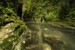 Thumbnail Stream in Ruakuri Bush and Scenic Reserve, Waitomo, King Country, North Island, New Zealand