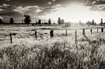 Thumbnail Sunset with a fenced-off pasture, black and white, South Island, New Zealand