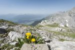 Thumbnail Dancelion (Taraxacum sect. Ruderalia), at the hiking trail to Mt Hafelekarspitze, Innsbruck at back, Inn Valley, Stubai Valley and the Austrian Central Alps, Tyrol, Austria, Europe