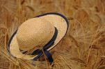 Thumbnail Straw hat in a field of rye (Secale cereale), summer scene, Tangstedt, Schleswig-Holstein, Germany, Europe