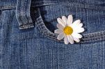 Thumbnail Daisy in a jeans pocket