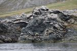 Thumbnail Folding, folded rock strata, geological fold / Trygghamna, Isfjorden, Alkhornet, Spitsbergen, Svalbard Archipelago, Norway, Europe