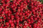 Thumbnail Cherries, Styria, Austria, Europe