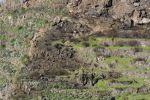 Thumbnail Partially burned mountainside / Valle Gran Rey, La Gomera, Kanarische Inseln, Spain, Europe