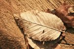 Thumbnail Autumn leaf
