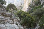 Thumbnail Hiking trail with a railing made of wood, scattered trees, Holm oaks (Quercus ilex), limestone rocks, Rouwas Gorge, Ida Mountains, near Ano Zaros, Crete, Greece, Europe