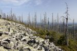 Thumbnail Evening mood on the summit of Lusen Mountain with forest dieback, Bavarian Forest, Bavaria, Germany, Europe, PublicGround