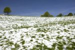 Thumbnail Meadow with snow in the Black Forest, St. Peter, Baden-Wuerttemberg, Germany, Europe