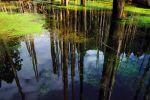 Thumbnail Wangyou Forest, Taiwan, China, Asia