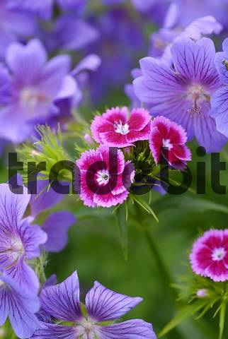 differently colored blooms in the flower patch