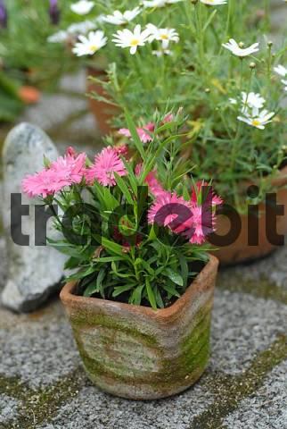 flower pots on the terrace