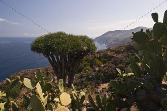 Coast, El Tablado, La Palma, Canary Islands, Spain, Europe