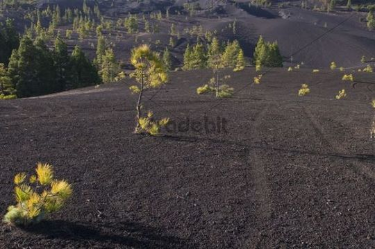 Llanos de Jable, volcanic ash, La Palma, Canary Islands, Spain, Europe