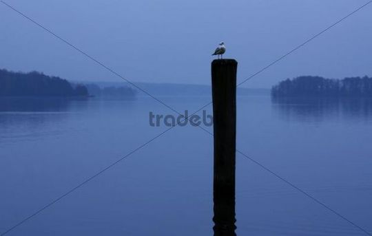 Sea gull standing on a pole at the Scharmuetzelsee, Brandenburg, Germany, Europe